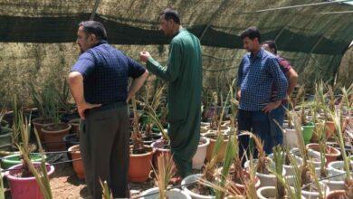 صورة عميد كلية الزراعة بجامعة القادسية يزور مزرعة الصقور لزراعة النخيل للاصناف النادرة