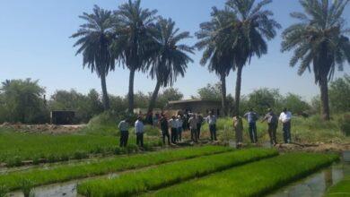 صورة كلية الزراعة بجامعة القادسية تنظم دورة حول زراعة الرز باستخدام الشتال الميكانيكي